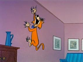 cat-climbing-wall